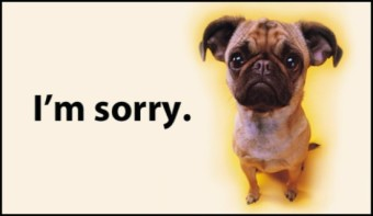 17343-im-sorry-pug